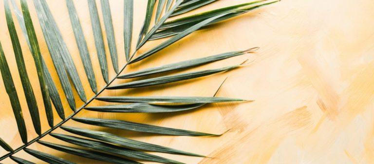 Palm Sonntag